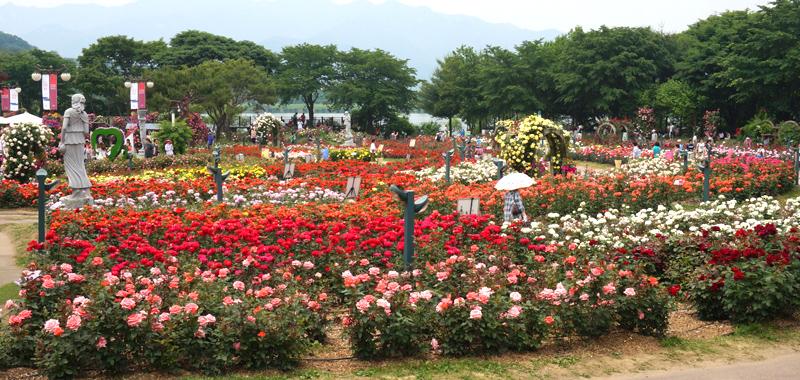 rosegarden130611-main