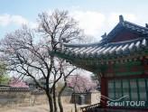 changdeokgung_tour06
